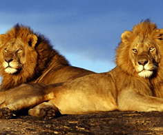 Kenya Safari Tours Packages from AED 4359 per person