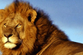 best Kenya Safari Holiday Price from AED 4359 per person