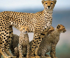 South Africa Beaches And Wild Safaris Tours Packages